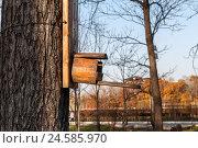Скворечник в парке. Стоковое фото, фотограф Владимир Иванов / Фотобанк Лори