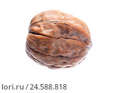 Купить «Walnut, completely, nut, stone fruit, semen, core, stone core, walnut core, peel, nutshell, thick-skin, Food, nutrition healthy, product photography, cut out, studio,», фото № 24588818, снято 4 декабря 2007 г. (c) mauritius images / Фотобанк Лори