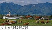 Купить «Germany, Upper Bavaria, Ohlstadt, local view, meadow, cow's focuses, background, mountain, Ettaler Mandl, South Germany, Bavaria, alpine upland, mountains...», фото № 24590786, снято 20 ноября 2007 г. (c) mauritius images / Фотобанк Лори