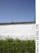Купить «Spain, Kastilien-La Mancha, cemetery, defensive wall, madonna figure, meadow, place rest, cemetery defensive wall, cemetery bezel, statue, sculpture, figure, Madonna, nobody, heaven, copy space,», фото № 24592170, снято 12 ноября 2007 г. (c) mauritius images / Фотобанк Лори