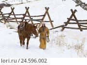 Купить «Cowgirl walking beside her Quarter Horse along a wooden fence,», фото № 24596002, снято 21 июля 2018 г. (c) mauritius images / Фотобанк Лори