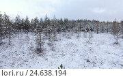 Купить «Болото и лес в зимнее время года», видеоролик № 24638194, снято 26 ноября 2016 г. (c) Кекяляйнен Андрей / Фотобанк Лори