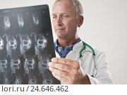 Купить «Doctor checks radiograph,», фото № 24646462, снято 21 апреля 2018 г. (c) mauritius images / Фотобанк Лори