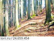 Купить «Path, beech forest, background blur,», фото № 24659454, снято 17 июня 2019 г. (c) mauritius images / Фотобанк Лори