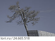 Купить «crooked tree beside paling,», фото № 24665518, снято 26 сентября 2018 г. (c) mauritius images / Фотобанк Лори