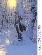 Зимний лес, фото № 24708106, снято 15 декабря 2016 г. (c) александр жарников / Фотобанк Лори