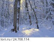 Зимнее утро в лесу, фото № 24708114, снято 17 декабря 2016 г. (c) александр жарников / Фотобанк Лори