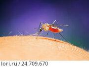 Купить «Противное насекомое комар сидит на коже и пьет кровь», фото № 24709670, снято 22 августа 2016 г. (c) Бачкова Наталья / Фотобанк Лори