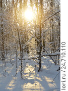 Купить «В зимнем заснеженном лесу», эксклюзивное фото № 24710110, снято 16 декабря 2016 г. (c) lana1501 / Фотобанк Лори