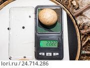Птичьи яйца: Чеглок. Стоковое фото, фотограф Василий Вишневский / Фотобанк Лори