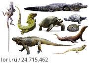 Купить «set of reptiles isolated», фото № 24715462, снято 29 марта 2020 г. (c) Яков Филимонов / Фотобанк Лори