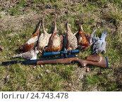Охотничьи трофеи лежат на траве рядом с оружием. Стоковое фото, фотограф Игорь Кириленко / Фотобанк Лори