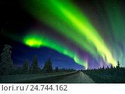Зимний ночной пейзаж с северным сиянием и ночным лесом с дорогой. Полярное сияние, или Аврора. Стоковое фото, фотограф Оксана Владимировна Грачева / Фотобанк Лори