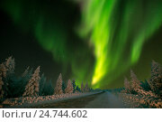 Купить «Зимний ночной пейзаж с северным сиянием и ночным лесом и дорогой. Полярное сияние, или аврора», фото № 24744602, снято 12 декабря 2015 г. (c) Оксана Владимировна Грачева / Фотобанк Лори