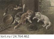 """Купить «""""Котята и ёж"""", открытка 1903 г», иллюстрация № 24764462 (c) Дмитрий Лукин / Фотобанк Лори"""