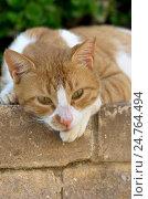 Купить «Рыжая уличная кошка лежит на бордюре», фото № 24764494, снято 24 октября 2016 г. (c) Gaft Eugen / Фотобанк Лори