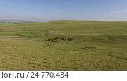 Купить «Табун бегущих, скачущих лошадей башкирской породы, производство кумыса», видеоролик № 24770434, снято 5 июля 2016 г. (c) Владимир Иванович Жилко / Фотобанк Лори