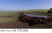 Купить «Табун бегущих, скачущих лошадей башкирской породы, производство кумыса», видеоролик № 24770458, снято 5 июля 2016 г. (c) Владимир Иванович Жилко / Фотобанк Лори