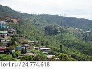 Купить «Haputale, горные склоны с плантациями чая, Шри Ланка», фото № 24774618, снято 29 ноября 2016 г. (c) Валерий Шанин / Фотобанк Лори