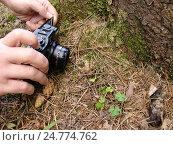 Руки с фотоаппаратом перед лягушкой в лесу. Стоковое фото, фотограф Владислав Чеканин / Фотобанк Лори