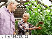Купить «happy senior couple at farm greenhouse», фото № 24785462, снято 25 августа 2016 г. (c) Syda Productions / Фотобанк Лори
