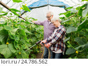 Купить «senior couple with garden hose at farm greenhouse», фото № 24786562, снято 25 августа 2016 г. (c) Syda Productions / Фотобанк Лори