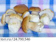 Купить «Белые грибы, или боровики (лат. Boletus edulis)», фото № 24790546, снято 28 августа 2016 г. (c) Елена Коромыслова / Фотобанк Лори