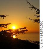 Красный закат и ветви дерева. Стоковое фото, фотограф Наталья Корзина / Фотобанк Лори