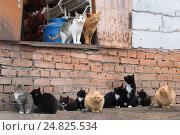 Купить «Стая бродячих кошек», фото № 24825534, снято 17 июля 2018 г. (c) Ирина Козорог / Фотобанк Лори