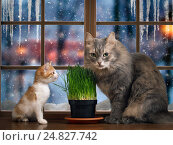 Купить «In the cat and kitten box. Green germinated oats, fresh greens in the winter. Outside, dusk, beautiful snow falls. The concept of proper nutrition cats, pet vitamins all year», фото № 24827742, снято 19 июля 2018 г. (c) Ирина Козорог / Фотобанк Лори