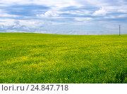 Купить «Цветущее рапсовое поле в Беларуси», фото № 24847718, снято 25 мая 2016 г. (c) Ольга Коцюба / Фотобанк Лори
