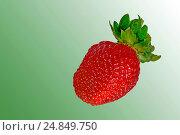 """Клубника """"Лорд"""" на зелёном фоне. Стоковое фото, фотограф Виктор Архипов / Фотобанк Лори"""