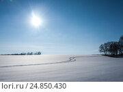 Купить «Winter landscape with trees and grass», фото № 24850430, снято 25 января 2014 г. (c) bashta / Фотобанк Лори