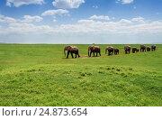 Купить «Herd of elephants walking at the African pasture», фото № 24873654, снято 16 августа 2015 г. (c) Сергей Новиков / Фотобанк Лори