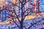 Яркие красные и золотые стеклянные елочные шарики на ветках деревьев на Красной площади на фоне Торгового дома ГУМ. Москва, фото № 24874858, снято 15 декабря 2016 г. (c) Владимир Сергеев / Фотобанк Лори