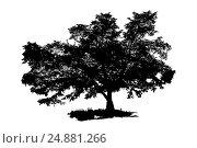 Силуэт дерева на белом фоне. Стоковая иллюстрация, иллюстратор Евгений Беляев / Фотобанк Лори
