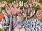 Разнообразная морская рыба на прилавке рыбного магазина в Стамбуле, фото № 24882038, снято 20 декабря 2014 г. (c) Истомина Елена / Фотобанк Лори