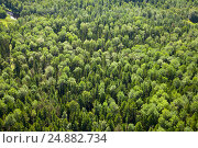Top view over forest, фото № 24882734, снято 5 июля 2011 г. (c) Владимир Мельников / Фотобанк Лори