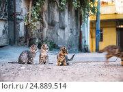 Купить «Three street Kittens watching like a kitten runs away», фото № 24889514, снято 15 октября 2016 г. (c) Andrei Bortnikau / Фотобанк Лори