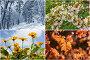 Четыре сезона. Коллаж изображений времен года, фото № 24893078, снято 18 января 2017 г. (c) Римма Тельнова / Фотобанк Лори