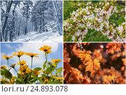 Четыре сезона. Коллаж изображений времен года. Стоковое фото, фотограф Римма Тельнова / Фотобанк Лори