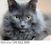 Кошачий выразительный взгляд. Стоковое фото, фотограф Анна Алексеева / Фотобанк Лори
