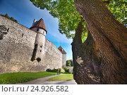Таллин (2013 год). Редакционное фото, фотограф Максим Попыкин / Фотобанк Лори