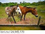 Лошади на пастбище. Стоковое фото, фотограф AK Imaging / Фотобанк Лори