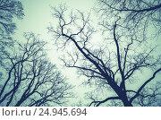 Купить «Leafless bare trees over cloudy sky», фото № 24945694, снято 7 ноября 2015 г. (c) EugeneSergeev / Фотобанк Лори