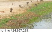 Купить «Flock of the monkeys near lake in Cambodia», видеоролик № 24957298, снято 7 декабря 2016 г. (c) Михаил Коханчиков / Фотобанк Лори