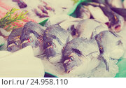 Купить «fresh dorado on market», фото № 24958110, снято 25 октября 2016 г. (c) Яков Филимонов / Фотобанк Лори