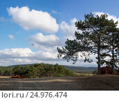 Panoramic landscape with hills, pine trees and clouds. Стоковое фото, фотограф Дмитрий Деренюк / Фотобанк Лори