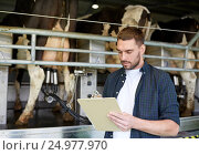 Купить «man with clipboard and milking cows on dairy farm», фото № 24977970, снято 12 августа 2016 г. (c) Syda Productions / Фотобанк Лори