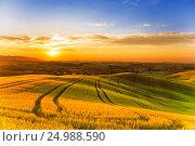 Купить «Сельский пейзаж Тосканы, Италия, San Quirico d'Orcia», фото № 24988590, снято 22 июня 2015 г. (c) Наталья Волкова / Фотобанк Лори